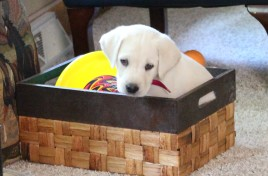 duke-in-a-box-2