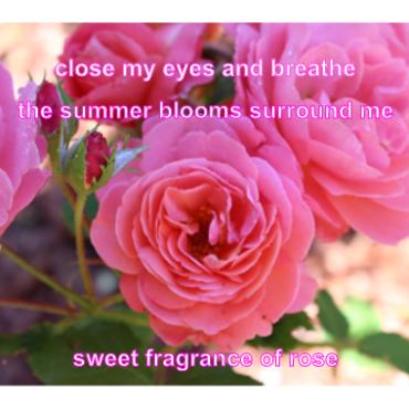 Haiku-11-pink
